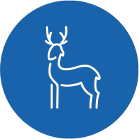 actividad_caza